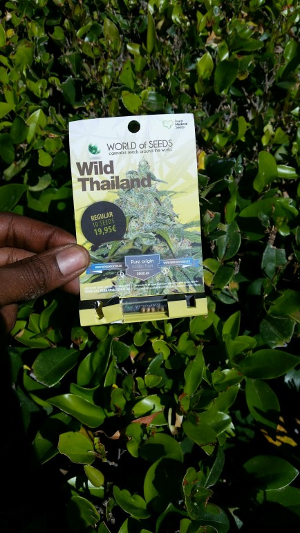 Wild Thailand seed pack WOS