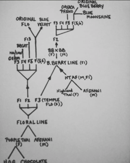dj short's genetic family tree
