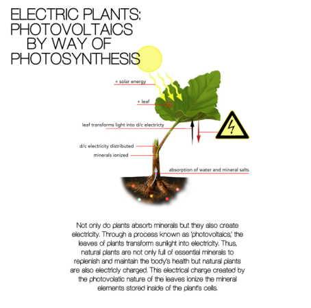 electric plant photovoltaics